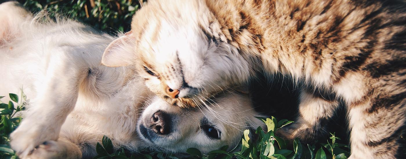 Benefits of companion pets for seniors