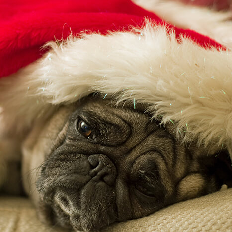 How to Help Seniors Overcome the Holiday Blues
