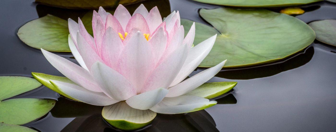 What Makes Caregiving Spiritual?
