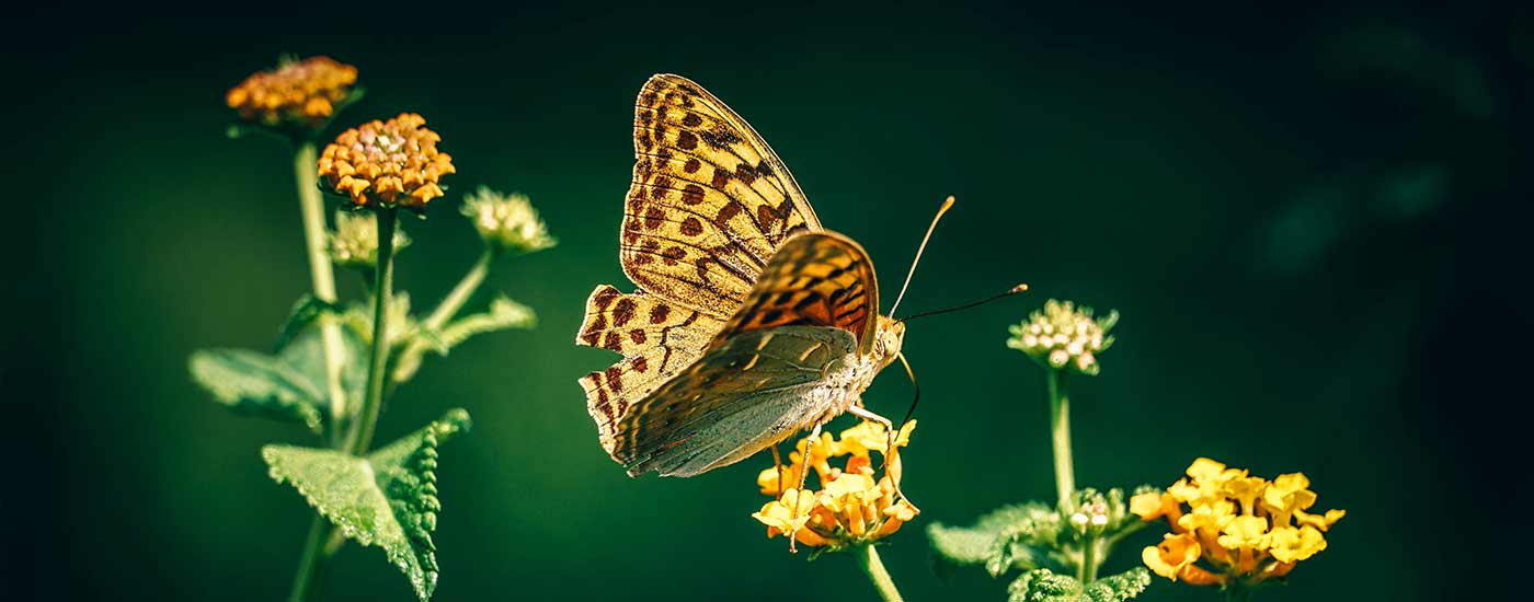 Caregiving and butterflies
