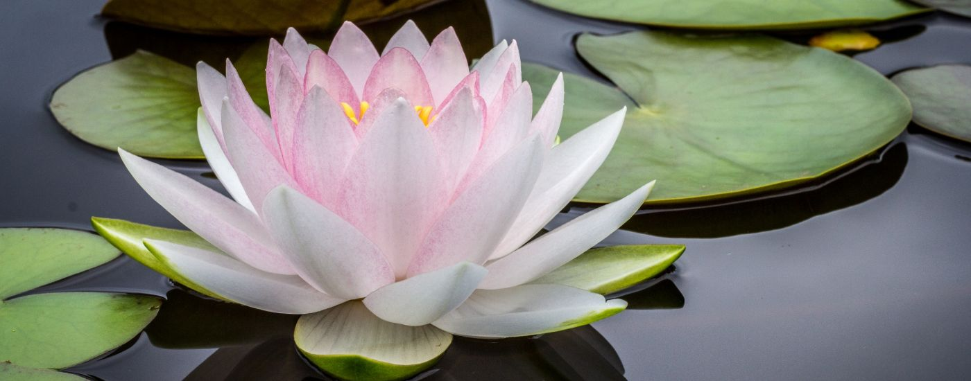What Makes Caregiving Spiritual